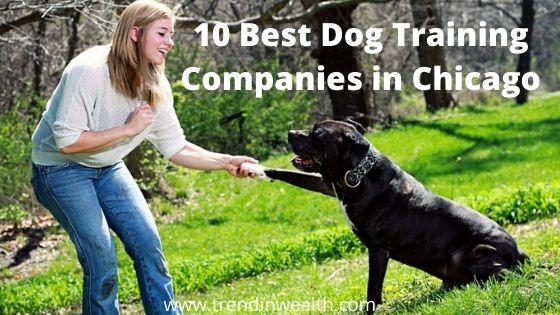 Best Dog Training in Chicago