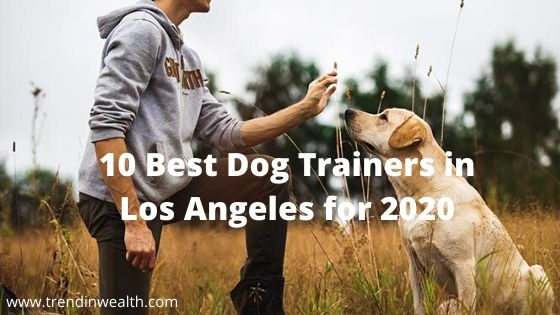 Best Dog Training in Los Angeles