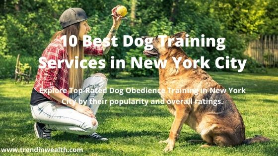 Best Dog Training Services in New York City