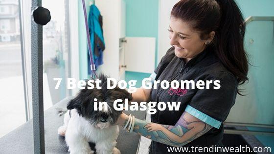 Best Dog Groomers in Glasgow