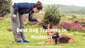 Best Dog Trainers in Houston