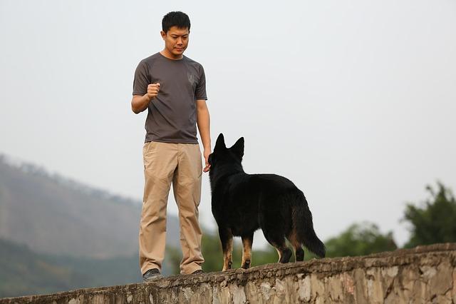 Dog training near me in the u.k