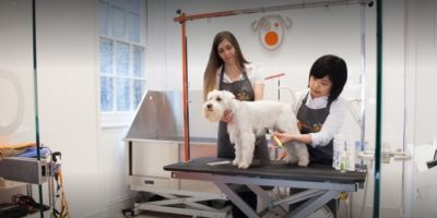 BOW WOW London Dog Grooming