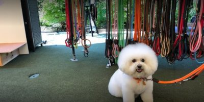 Just Barking Dog Grooming and Pet Boutique inside