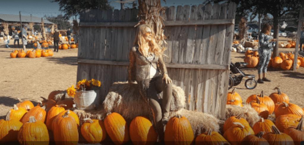 Hall's Pumpkin Farm