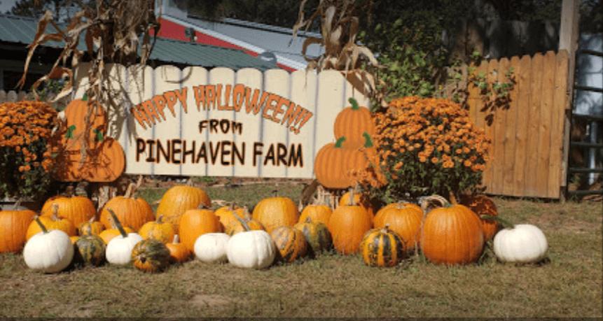 Pinehaven Farm